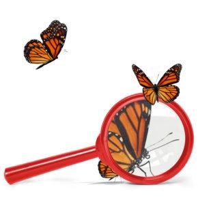 butterfly-expert