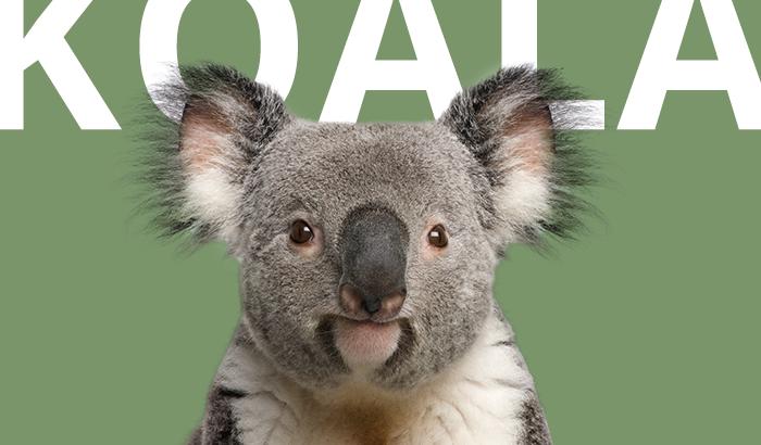 koala-blog
